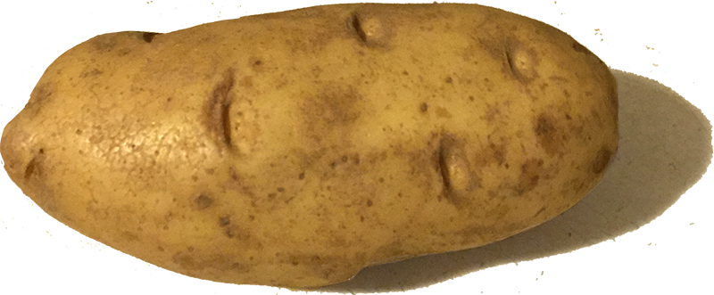 Amnesia Potato